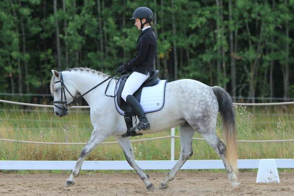 Many stables across the UK offer equestrian and horse riding activities. Either from one-day experiences to repeat lessons and courses; for riders of all ages and abilities. Some stables also offer specialised equipment and trainers for riders with disabilities.